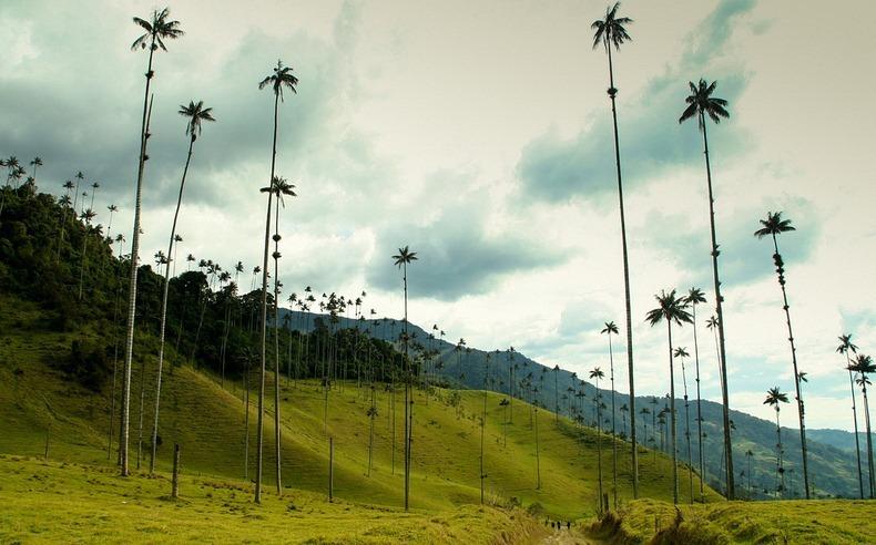 Worlds Tallest Palms