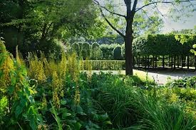 Garden Landscape with Tree