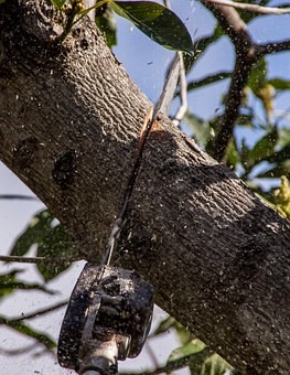 Tree Lopping WA