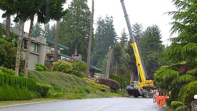Tree Removal Hurdles WA