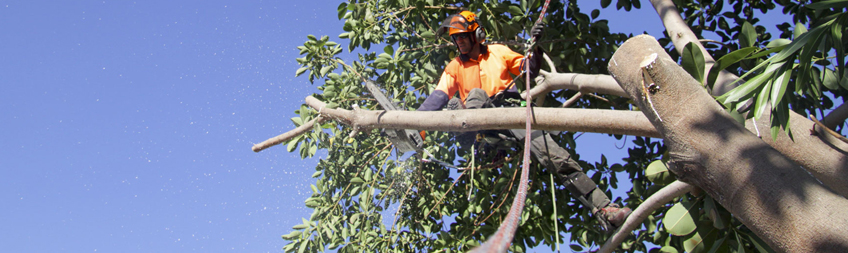 Commercial Tree Maintenance