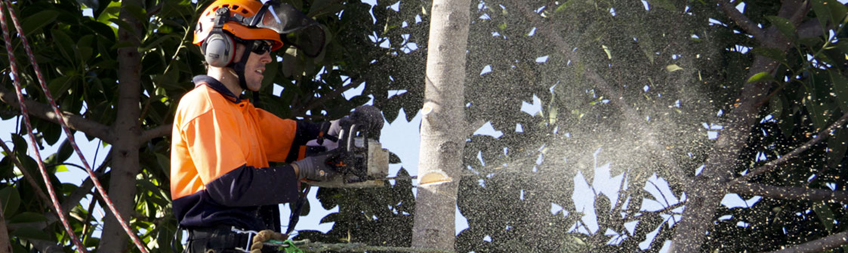 All Tress Perth _ Tree Removal_Pruning_Hedging_Stump Grinding