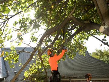 Fallen branch removal